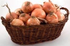Популярно про цибулю і цибульний сік від нежиті