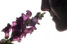 Як відновити нюх: причини погіршення нюху, діагностування, лікування
