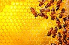Чи Правда, що при ангіні не можна їсти мед?