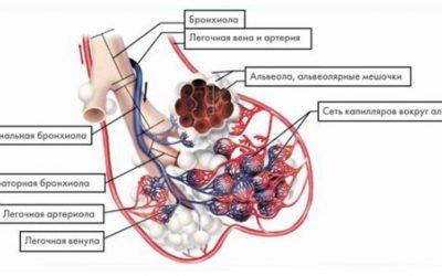 Бронхіоліт у дорослих – що це таке, симптоми і лікування