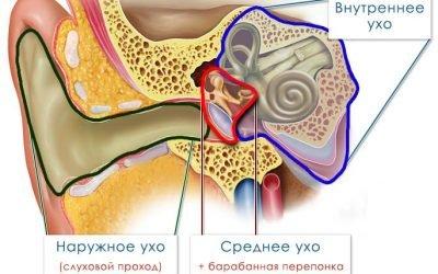 Отит – як лікувати запалення вуха в домашніх умовах?