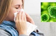 Чим відрізняється вірусний нежить від бактеріального і як він лікується?