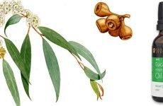 Як застосовувати Хлорофіліпт для лікування гаймориту?