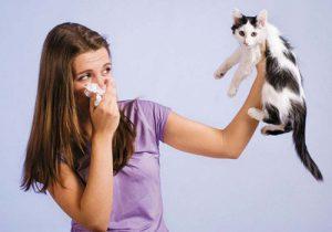 Як дізнатися нежить або алергія? Онлайн тест