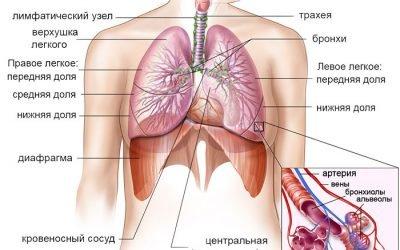 Відміну від пневмонії бронхіту – в чому різниця, ознаки і симптоми
