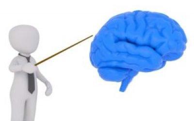 Електроенцефалографія головного мозку