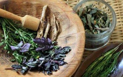 Лікарські трави при бронхіті у дорослих: список, опис, як застосовувати
