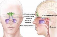 Гайморові пазухи: особливості будови, функції, захворювання, лікування