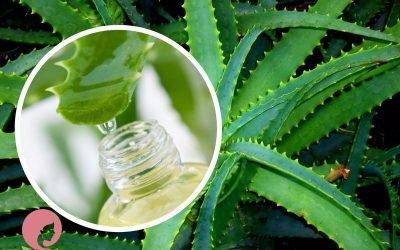 11 рецептів з алое і його соку для лікування нежитю у дорослих і дітей