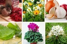 21 народний рецепт (засіб) для лікування гаймориту – яке ефективніше?