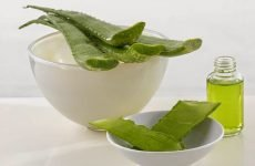 9 рецептів з соком алое при лікування гаймориту в домашніх умовах