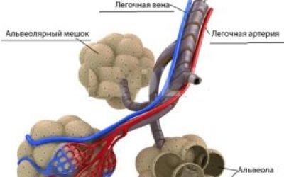 Альвеоліт легень: 4 види, причини і лікування хвороби