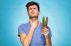 Горло дере: чим лікувати в домашніх умовах біль, сухий кашель і першіння