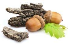 Кора дуба від нежитю: корисні властивості і застосування