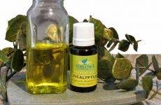 Масло евкаліпта від нежиті і гаймориту: застосування для лікування
