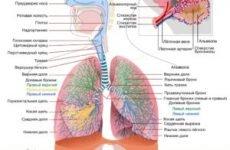 Про нашому сайті ( захворювання дихальної системи і легенів зокрема)