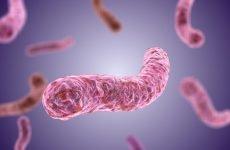 Паличка Коха (мікобактерії туберкульозу): скільки живе в приміщенні?