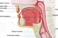 Запалення носоглотки: причини, симптоми і лікування