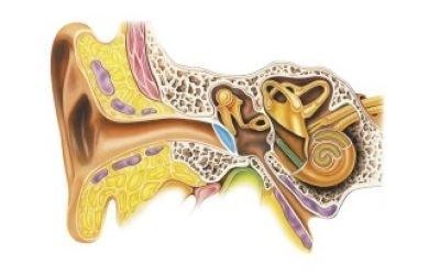 Нейросенсорна приглухуватість 1,2,3,4 ступеня: симптоми, причини, лікування