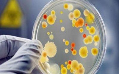 Золотистий стафілокок (скрофулезе): симптоми, причини і лікування