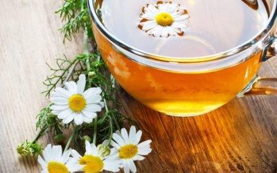 Рецепти з ромашкою при застуді: корисні властивості лікарської рослини